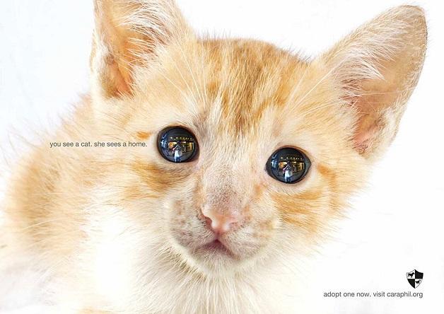 anuncio-animal-33