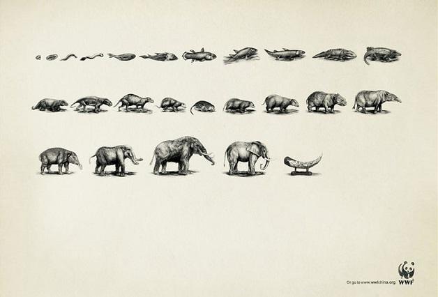 anuncio-animal-34