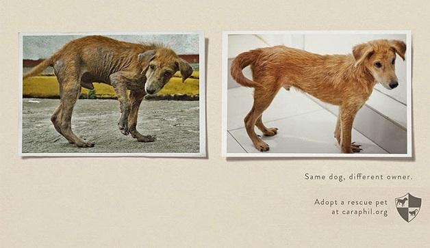 anuncio-animal-38