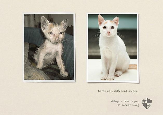 anuncio-animal-39