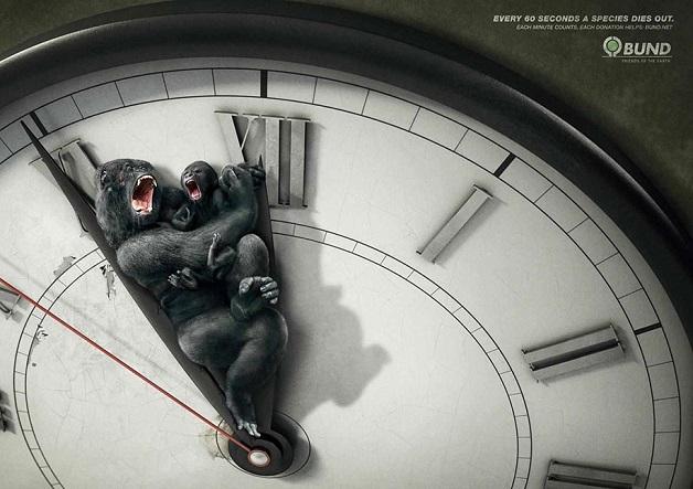 anuncio-animal-4