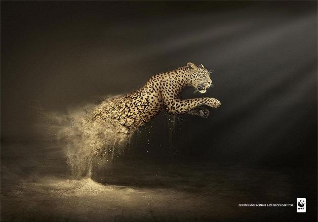 anuncio-animal-41