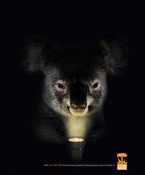 san-fransisco-zoo-koala